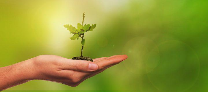 حملة زراعة 11 مليون شجرة فى تركيا